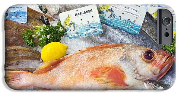 Aquatic Display iPhone Cases - Ocean Perch On A Fish Counter iPhone Case by Martyn F. Chillmaid