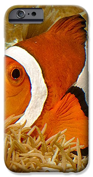 Ocellaris Clown Fish No 1 iPhone Case by Jerry Fornarotto