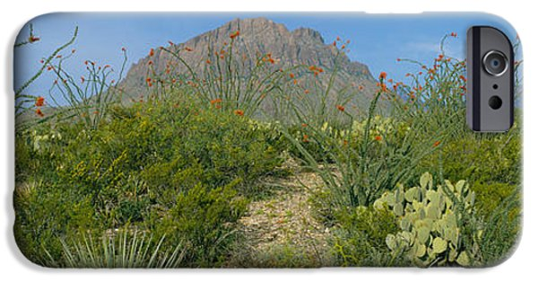 Pears iPhone Cases - Ocotillo Plants In A Park, Big Bend iPhone Case by Panoramic Images