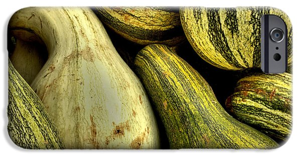 Fall iPhone Cases - October Gourds iPhone Case by Michael Eingle