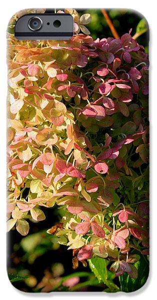 Purple Hydrangeas iPhone Cases - October Hydrangea iPhone Case by Hanne Lore Koehler