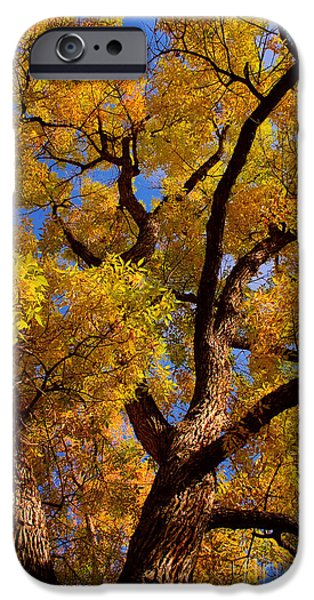 Striking Photography iPhone Cases - October iPhone Case by James BO  Insogna