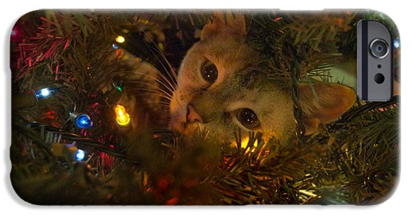 Pictures Of Cats Photographs iPhone Cases - Of Course iPhone Case by Skip Willits