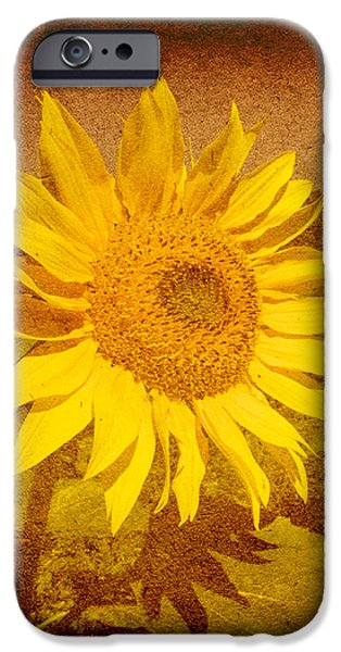 Daydream iPhone Cases - Of Sunflowers Past iPhone Case by Bob Orsillo