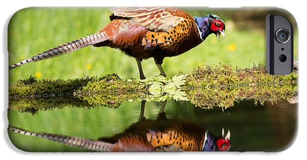 Gamebird iPhone Cases - Oh my what a handsome pheasant iPhone Case by Louise Heusinkveld