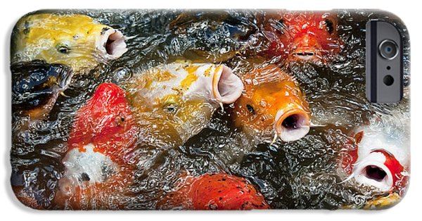 Butterfly Koi iPhone Cases - Oh No Why Must They Feed Us Naked iPhone Case by Wilma  Birdwell