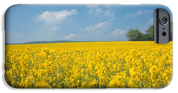 Rape iPhone Cases - Oilseed Rape Brassica Napus Crop iPhone Case by Panoramic Images