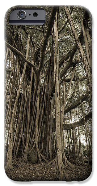 Root iPhone Cases - Old Banyan Tree iPhone Case by Adam Romanowicz