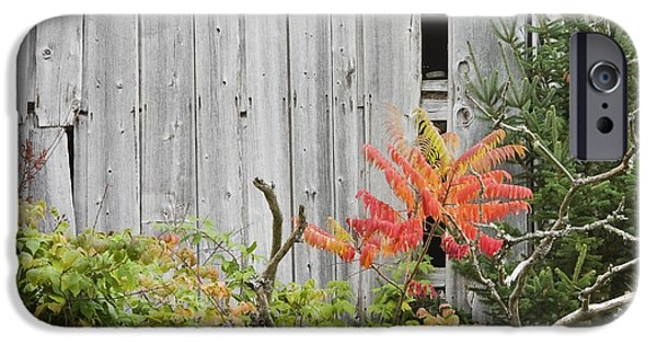 Maine Barns iPhone Cases - Old Barn in Fall iPhone Case by Keith Webber Jr