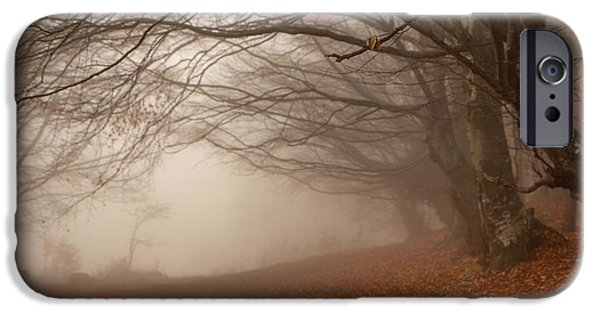Pathway iPhone Cases - Old Beech Trees In Fog iPhone Case by Jivko Nakev