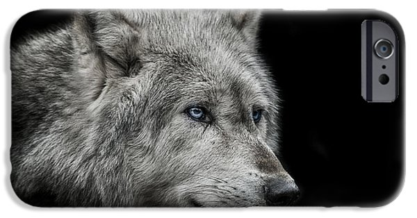 Animals Photographs iPhone Cases - Old blue eyes iPhone Case by Paul Neville