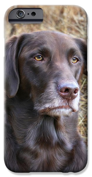 Chocolate Lab Digital Art iPhone Cases - Old Faithful iPhone Case by Lori Deiter