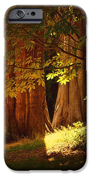 Stanley Park iPhone Cases - Old Forest iPhone Case by Maria Angelica Maira