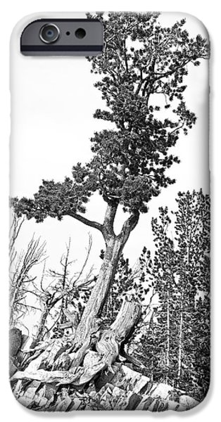 Harsh iPhone Cases - Old Gnarly Tree iPhone Case by Edward Fielding