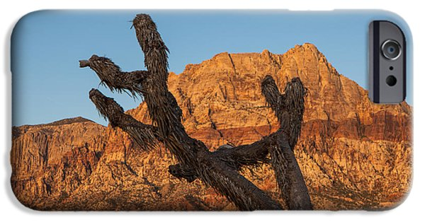 Red Rock iPhone Cases - Old Joshua Tree And Red Rocks  iPhone Case by Susan  Schmitz