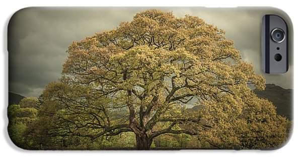 Mighty Oak iPhone Cases - The Old Oak of Glenridding iPhone Case by Chris Fletcher