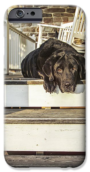 Porch iPhone Cases - Old Porch Dog iPhone Case by Diane Diederich
