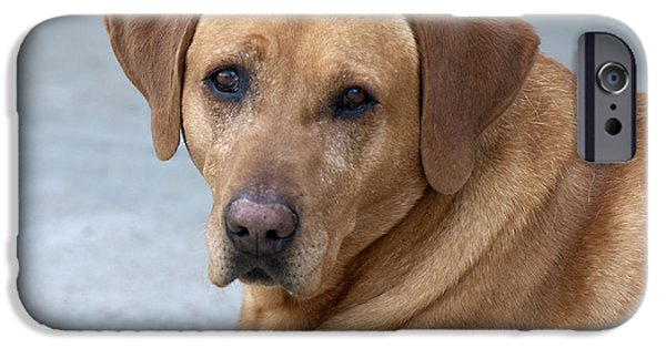 Puppies iPhone Cases - Old Soul iPhone Case by Cindy Angiel