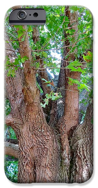 Carnton Plantation iPhone Cases - Old Souls Oak iPhone Case by Aimee Mouw