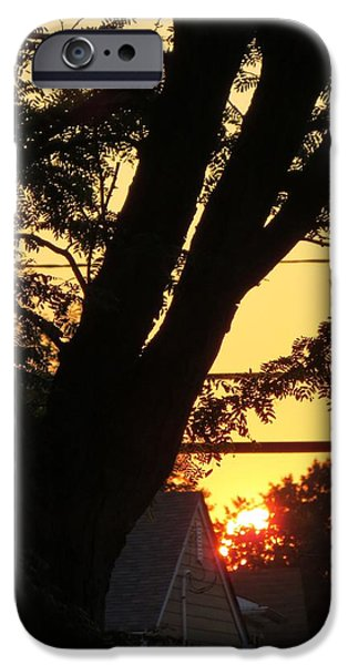 Painter Poster Photographs iPhone Cases - Old Tree and Sunset iPhone Case by Sonali Gangane