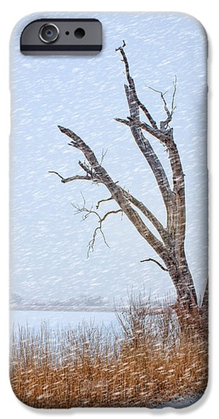 Nebraska iPhone Cases - Old Tree in Winter iPhone Case by Nikolyn McDonald