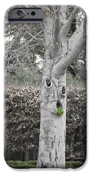 Historic Triangle iPhone Cases - Old Tree in Winter iPhone Case by Teresa Mucha