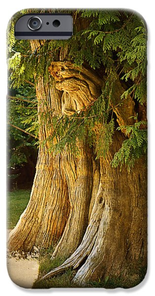 Stanley Park iPhone Cases - Old tree iPhone Case by Maria Angelica Maira