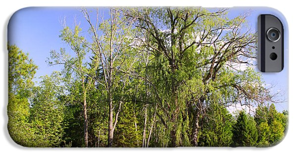 Weeping Willow Tree iPhone Cases - Old Willow Tree iPhone Case by Corey Ford
