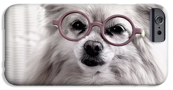 Dog Close-up iPhone Cases - Older and Wiser iPhone Case by Charline Xia