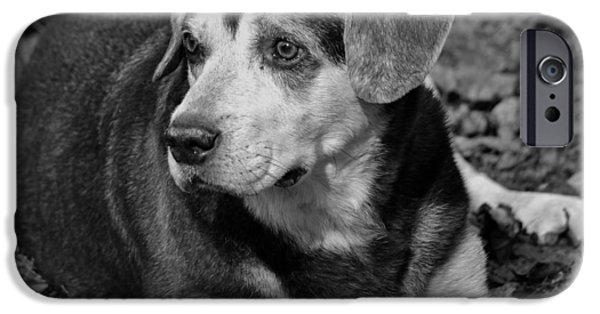 Mixed Labrador Retriever iPhone Cases - Older Gentleman iPhone Case by Krystal Goldie