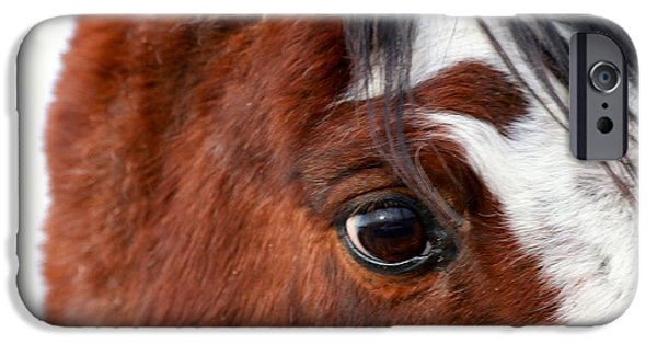 The Horse iPhone Cases - Older Stallion iPhone Case by Maria Jansson