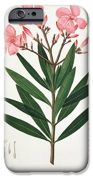 Flora Drawings iPhone Cases - Oleander iPhone Case by LFJ Hoquart