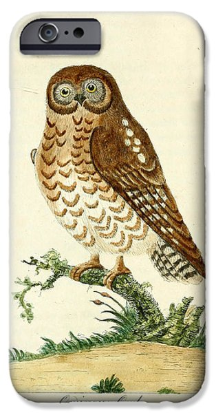 Dentist Drawings iPhone Cases - Ominous Owl iPhone Case by Philip Ralley