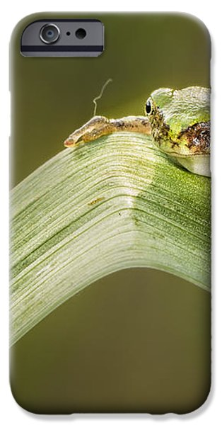 On A Leaf iPhone Case by Timothy Hacker