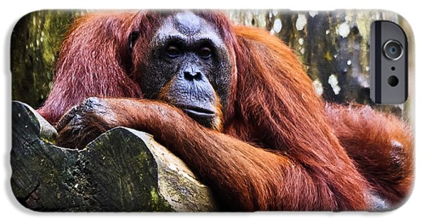 Orangutan Digital Art iPhone Cases - On a limb iPhone Case by Ray Shiu