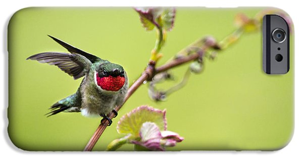 Archilochus Colubris iPhone Cases - On a Wing and a Prayer iPhone Case by Christina Rollo