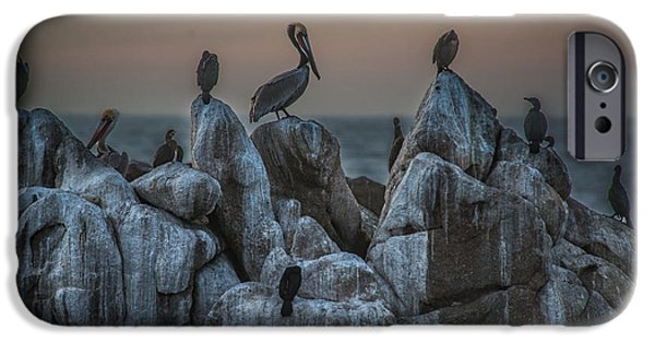 Seabirds iPhone Cases - On Guard iPhone Case by Bill Roberts