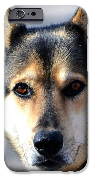 Huskies iPhone Cases - On Guard iPhone Case by Deena Stoddard