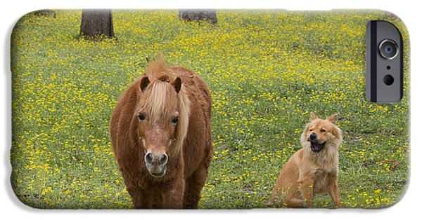 Dog In Landscape iPhone Cases - On Guard  iPhone Case by TN Fairey