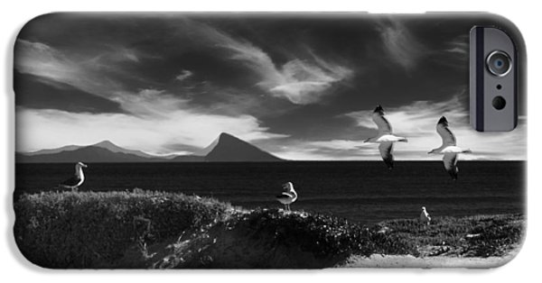 Flying Seagull iPhone Cases - On the Coast of South Africa iPhone Case by Mountain Dreams
