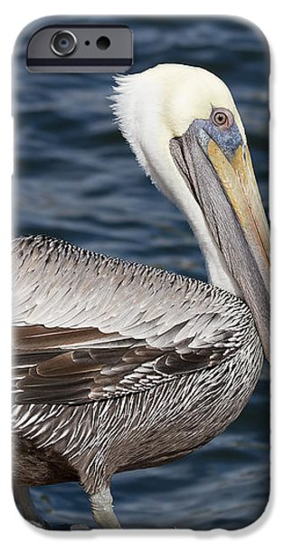 On the Edge - Brown Pelican iPhone Case by Kim Hojnacki