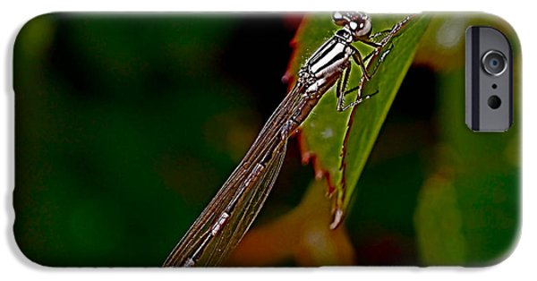 Dragonfly iPhone Cases - On the Edge iPhone Case by Rona Black