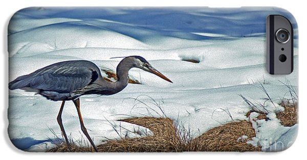 Photos Of Birds iPhone Cases - On The Edge iPhone Case by Skip Willits
