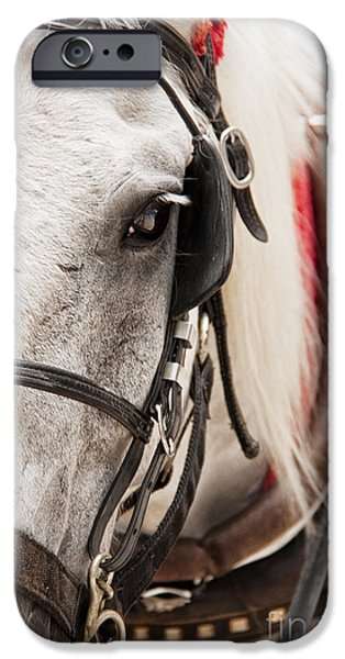 Horse Bit iPhone Cases - On The Job iPhone Case by Margie Hurwich