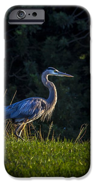 Swamps iPhone Cases - On The March iPhone Case by Marvin Spates