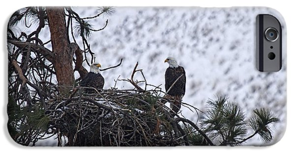 Eagle Photographs iPhone Cases - On the Nest iPhone Case by Mike  Dawson