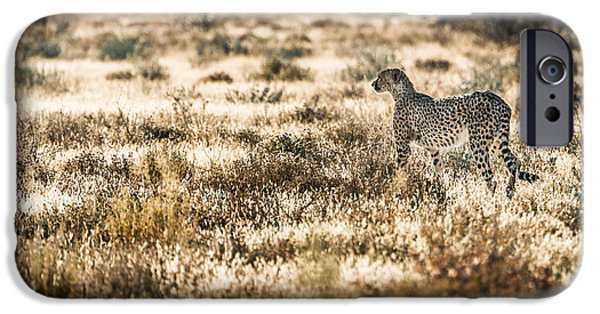 Feline iPhone Cases - On the Prowl iPhone Case by Duane Miller