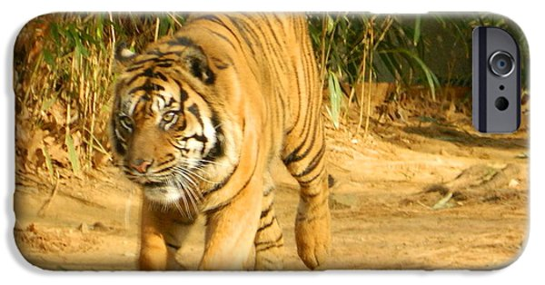 Smithsonian iPhone Cases - On The Prowl iPhone Case by Emmy Marie Vickers