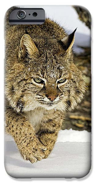 On the Prowl iPhone Case by Jack Milchanowski