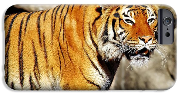 The Tiger Hunt iPhone Cases - On the Prowl iPhone Case by Jason Politte